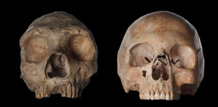 Neandertal and human skull comparison