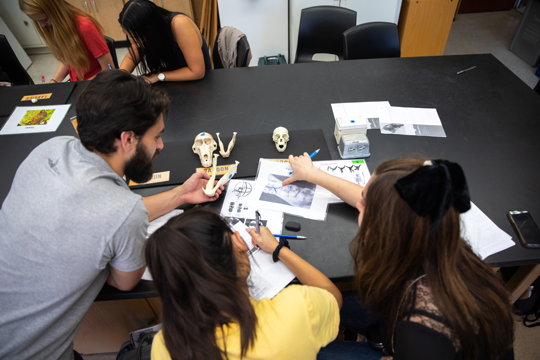 A group of students working with bone samples