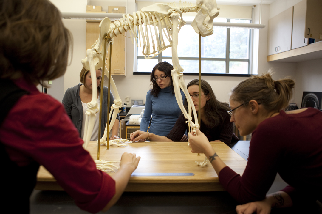 Students surrounding a hominid skeleton